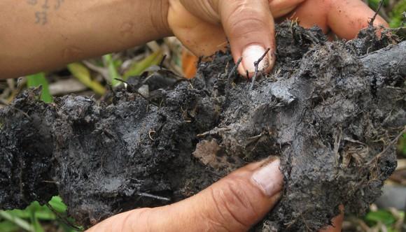 evidente presencia de petroleo en suelos
