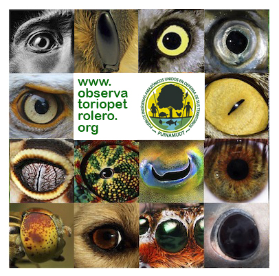 observatorio_ojos