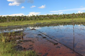 detalle cocha de petroleo