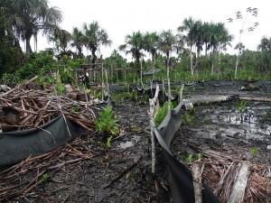 Guardaparque de SERNANP inspeccionando deforestación sin permiso de Pluspetrol. Derrame en zona del oleoducto, 4 de diciembre de 2013. Foto proporcionada por Acodecospat.