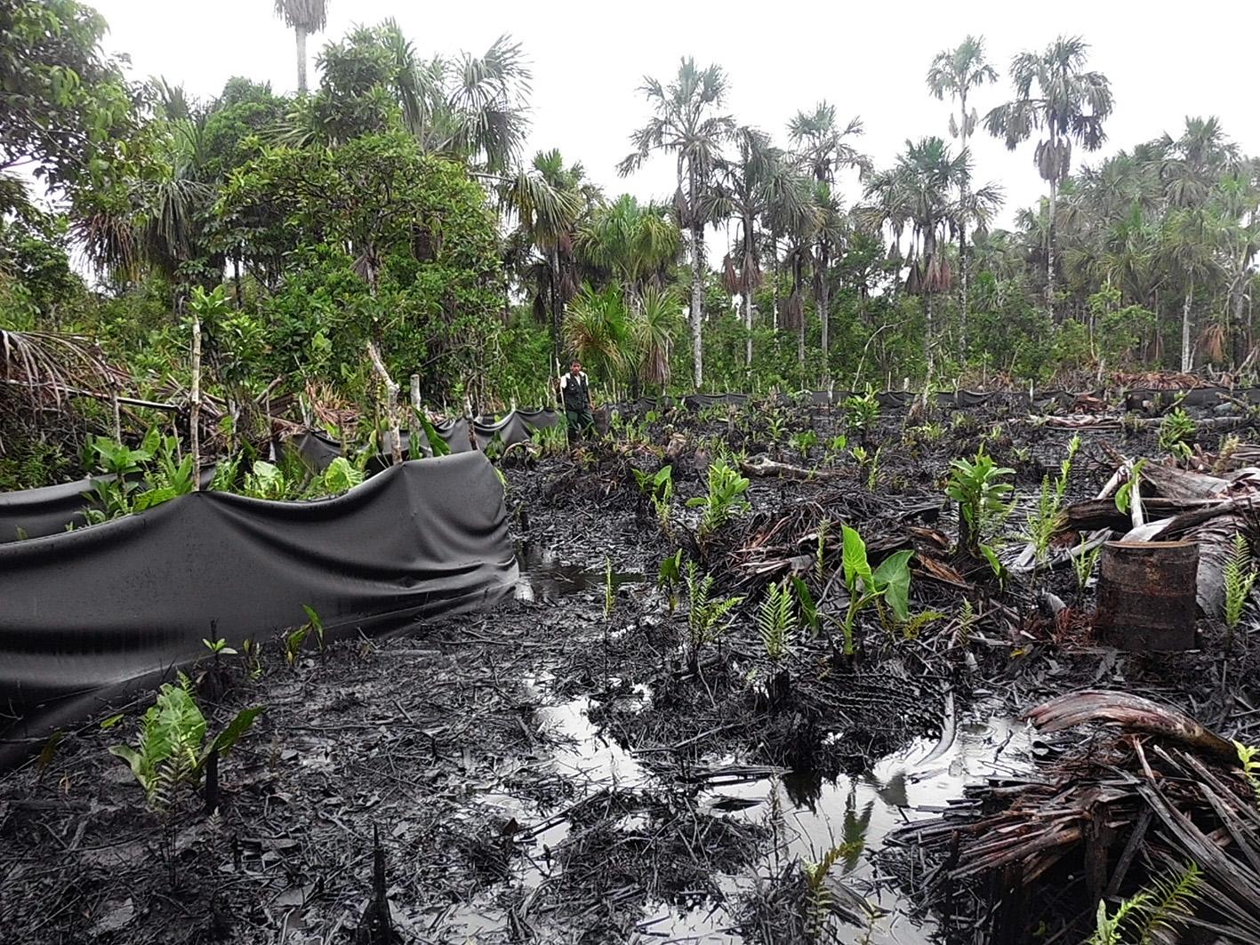 Tareas de remediación, al fondo el guardaparque de la RN Pacaya Samiria. Derrame en zona del oleoducto, 4 de diciembre de 2013. Foto proporcionada por Acodecospat.