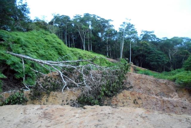 Volquetes de tierra y árbol caído interrumpen la carretera. Fotografía de monitor ambiental de Nueva Jeriusalén.